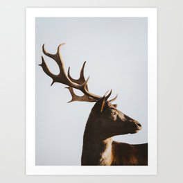 Deer Showing Off His Antlers | Animal Photography | Nature Art Print