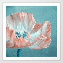 sweet poppy  Art Print