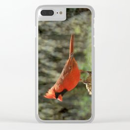 Northern Cardinal Clear iPhone Case