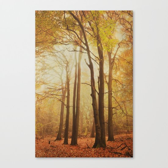 through the woods 1 Canvas Print