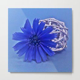 Still life with chicory flower Metal Print