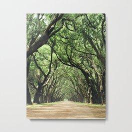 Canopy of Oaks Metal Print