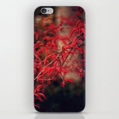 Woodland Red iPhone & iPod Skin