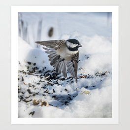 Christmas Chickadee Art Print