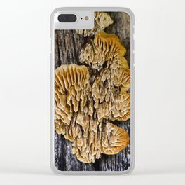 Spores on Wood #1 Clear iPhone Case
