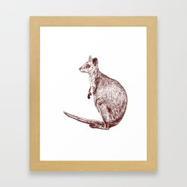 Swamp Wallaby Framed Art Print