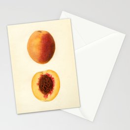 Vintage Illustration of a Sliced Peach Stationery Cards