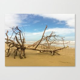Tree Of Barnacles Canvas Print