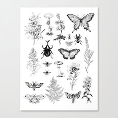 Naturalist Canvas Print
