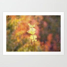 Seasonal Closeup - Autumn Art Print