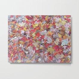 sugar maple sprinkles Metal Print