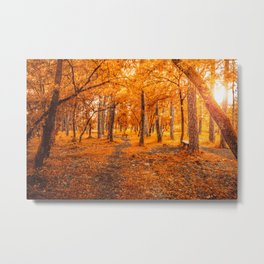 Sun through autumn Metal Print