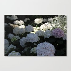 White Hydrangea Flowery Meadow Canvas Print