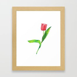Tulip flower Framed Art Print