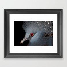 Victoria Crowned Pigeon Framed Art Print