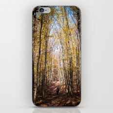 Autumn forest iPhone & iPod Skin