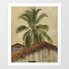 Palm Trees and Housetops in Ecuador Vintage Painting, 1857 Art Print