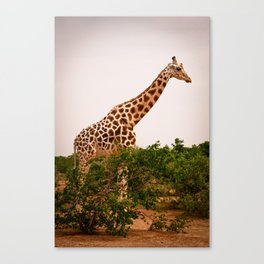 Too Tall for Camouflage (Niger) Canvas Print