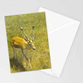 Care Free Stationery Cards