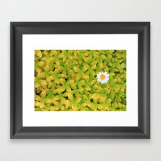 Daisy Flower Reaching For The Sun. Framed Art Print