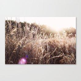 awakened the sun Canvas Print