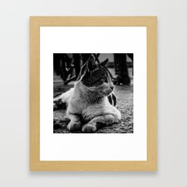 Istanbul Cats Framed Art Print