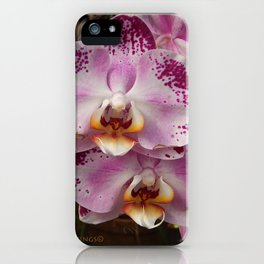Pink Orchid Blossom from Mexico iPhone Case