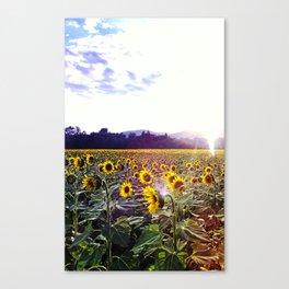Aah Sunflower Canvas Print