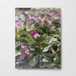 Flowers In Almeria Metal Print