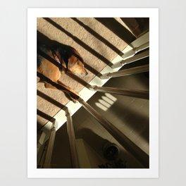 Dog in Sunlight Art Print