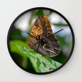 Owl Eye Butterfly by Teresa Thompson Wall Clock