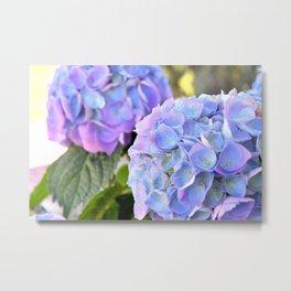 Purple Blue Hydrangeas Metal Print