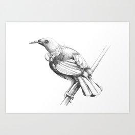 New Zealand Tui Art Print