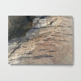 Reed Shadows Metal Print