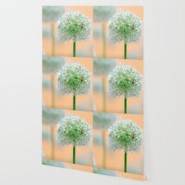 Great star flower Wallpaper