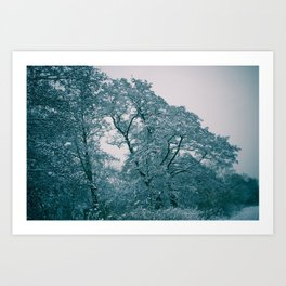 Oblique Winter Tree Art Print