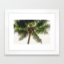 Coconut Bounty Framed Art Print