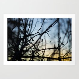 Winter Sunset in the Woods Art Print