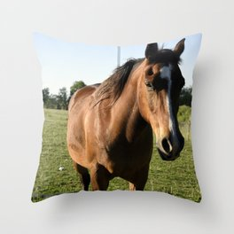 Brown Horse in a Pasture Throw Pillow