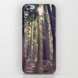 Redwoods Hike iPhone Skin