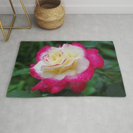 Double Delight Rose - Red and cream beauty Rug
