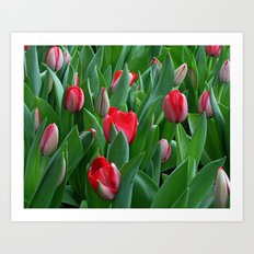 Red Among the Green Art Print