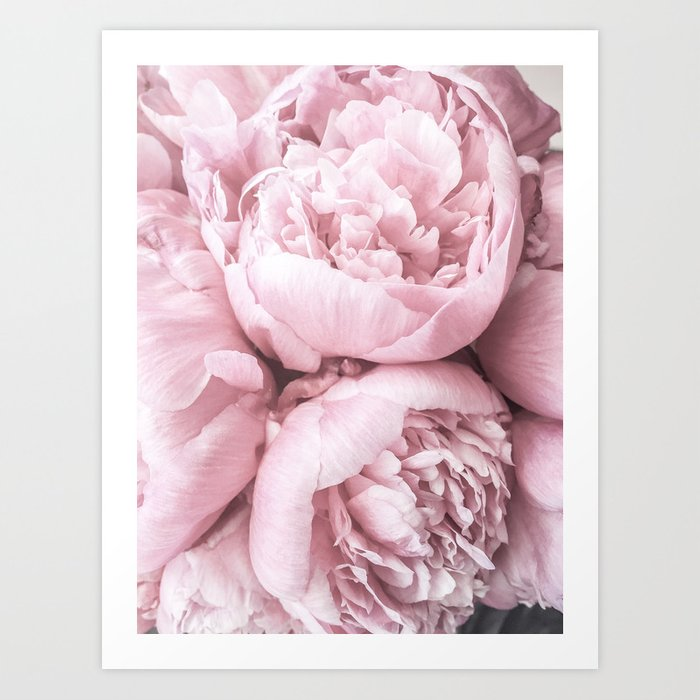 Lush Peony Flower Art Print By Ginajessicasmith Society6
