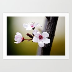 Signs of Spring 3 Art Print