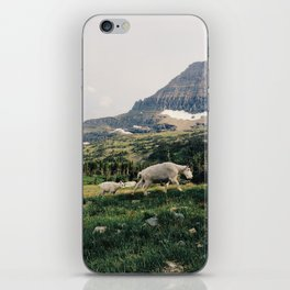 Montana Mountain Goat Family iPhone Skin