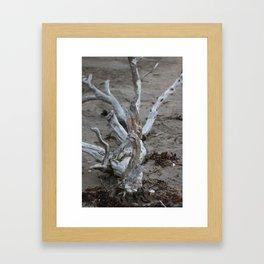 Moeraki Branches (1) Framed Art Print