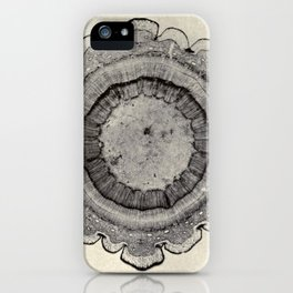 Spruce Branch iPhone Case