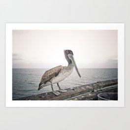 Boardwalk Pelican Art Print