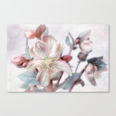winter blossom Canvas Print