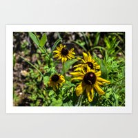Yellow Summer Flowers Art Print
